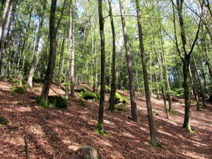 lindenhof4