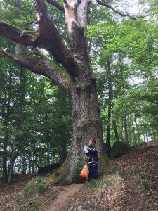 Kleine Männer und große Bäume